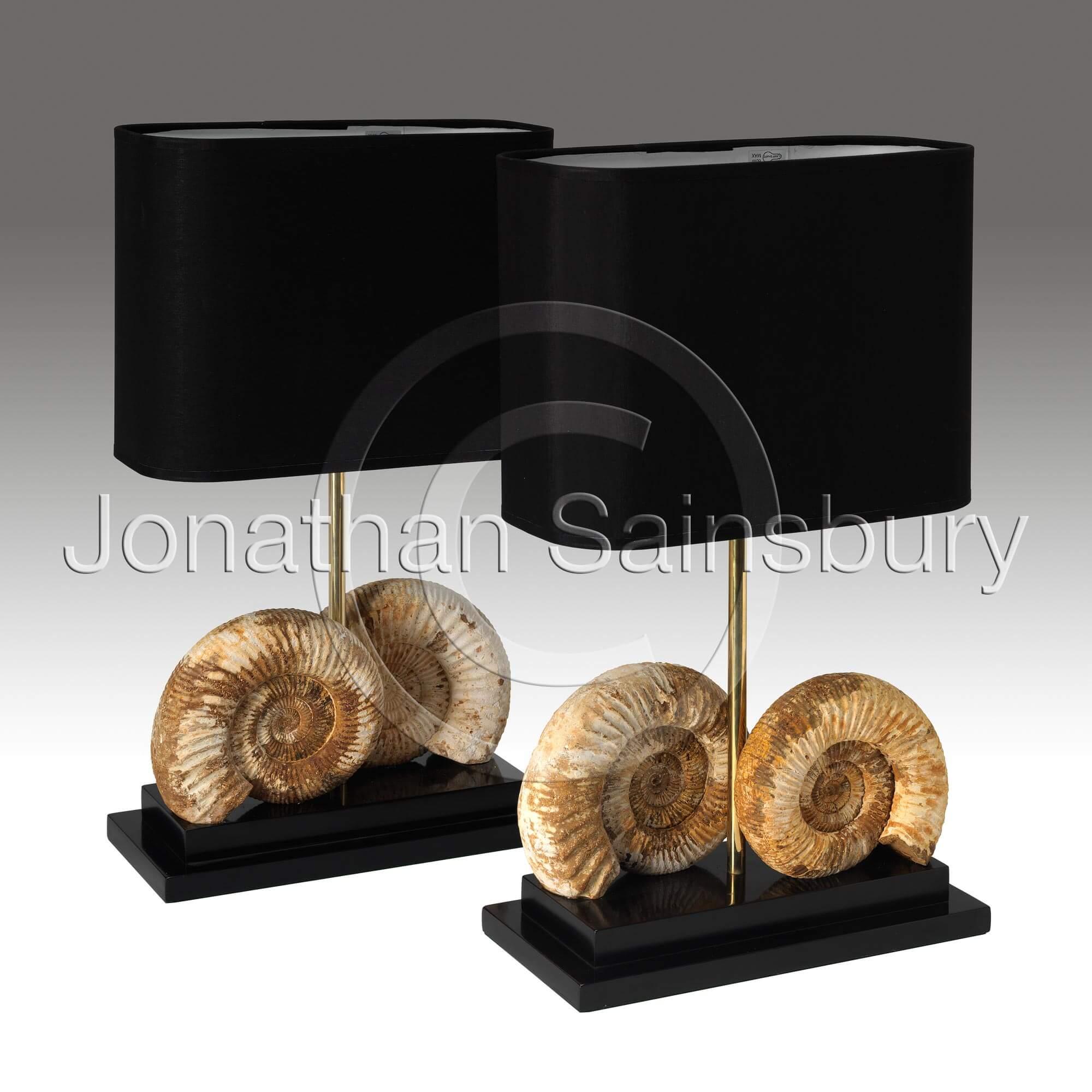 Ammonite Lamps